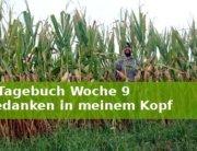 Jakobsweg-Tagebuch Woche 9 Wanderveg